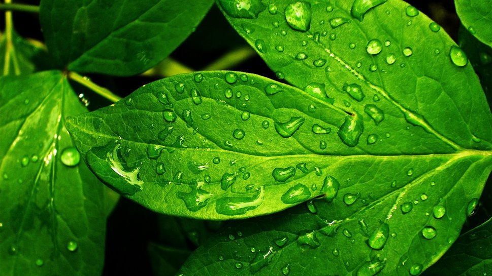 733693__nature-fresh-green-backgrounds-backrounds-wallpaper-wallpapers_p