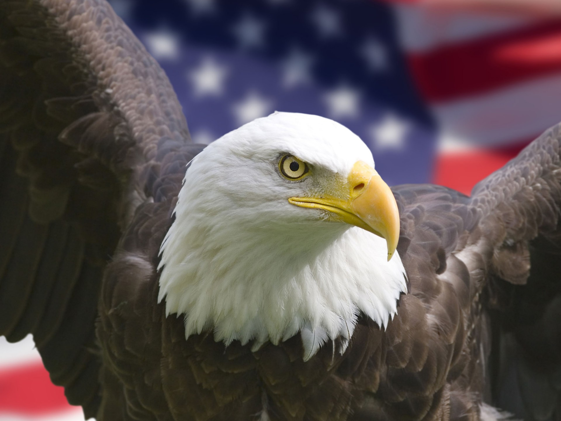 Bald-Eagle-Usa-1440x1920