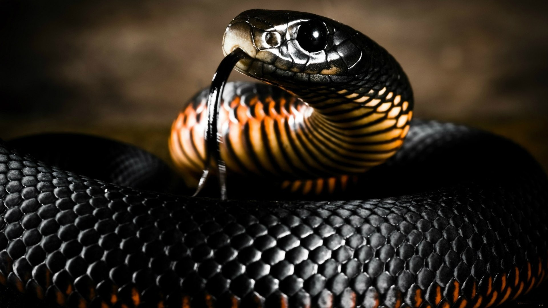 Black-Mamba-Snake-HD-Wallpapers