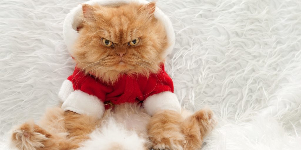 Persian cat with Tv remote control