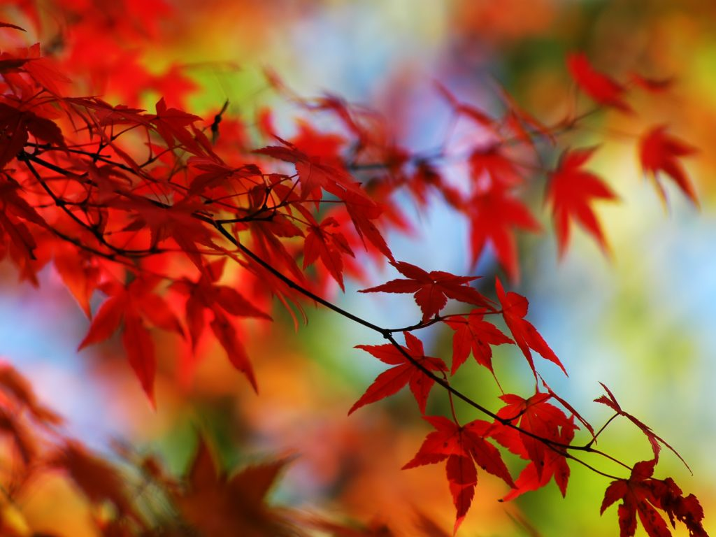 Otoño-Mundo-en-Ocres-wallpapers-hd-fotosdelanaturaleza.es (4)