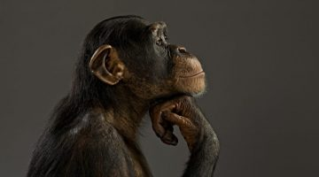 fotos-hd-de-Chimpances-fotosdelanaturaleza.es