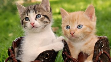 lindos-gatitos-wallpapers-en-hd-Fotosdelanaturaleza (5)