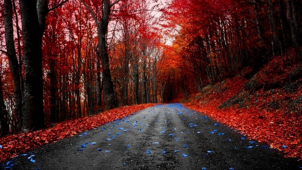 Forest Autumn Blue Road Red Maple Leaves Desktop