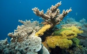 Coral reef with stony corals and soft corals, Philippines, Pacific Ocean