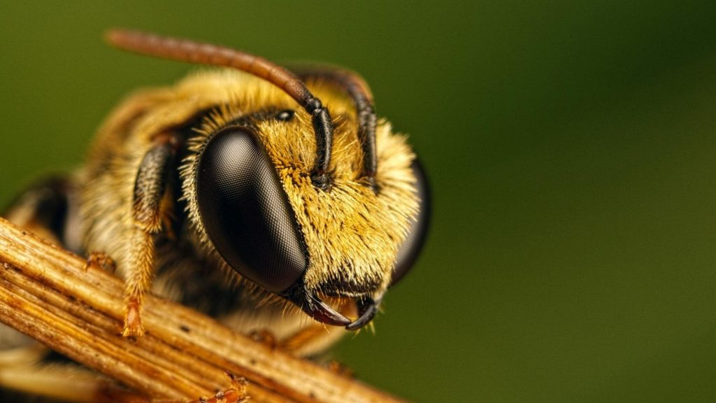 animals-bees-insects-nature-1920x1080-82773