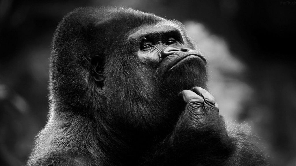 animals-gorillas-grayscale-1920x1080-88769
