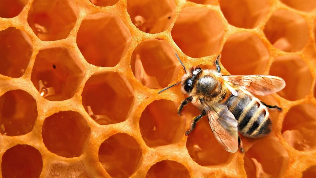 bees-honeycomb-insects-1920x1080-83848