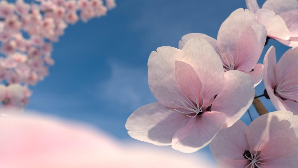 blossom-cherry-blossoms-flowers-nature-pink-1920x1080-80781