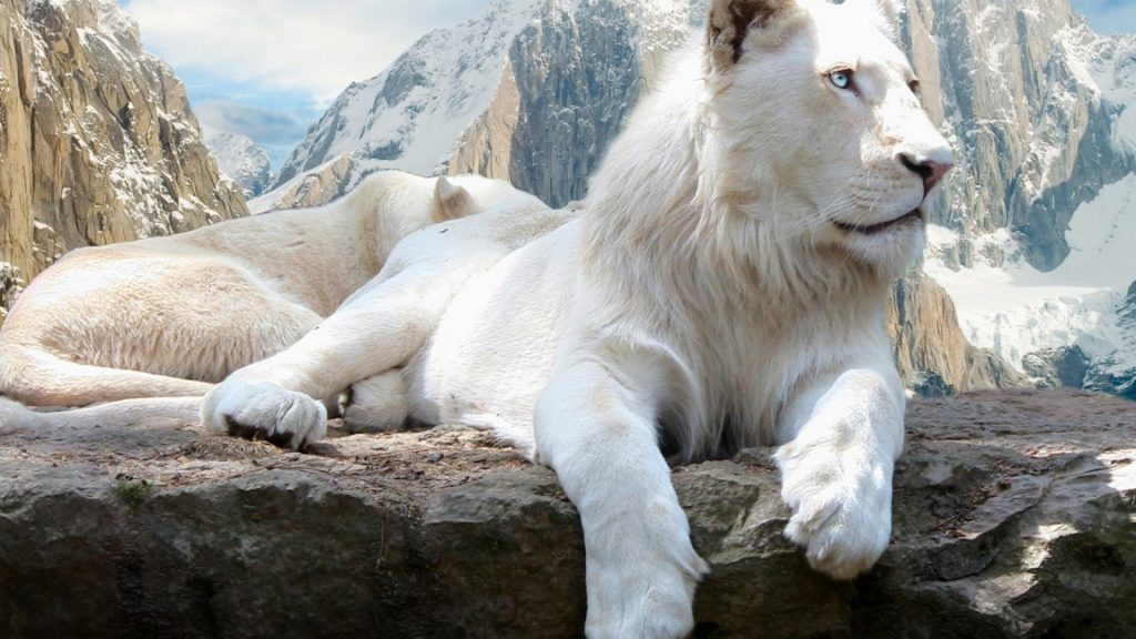 mountains-white-animals-lions-front-angle-view-1920x1080-59053