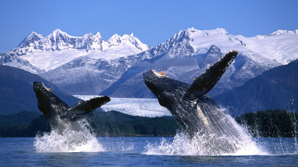 whale-high-definition-wallpaper