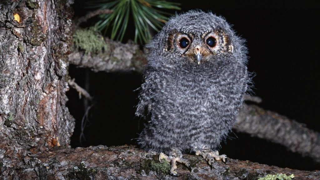 birds-animals-funny-owls-1920x1080-70116
