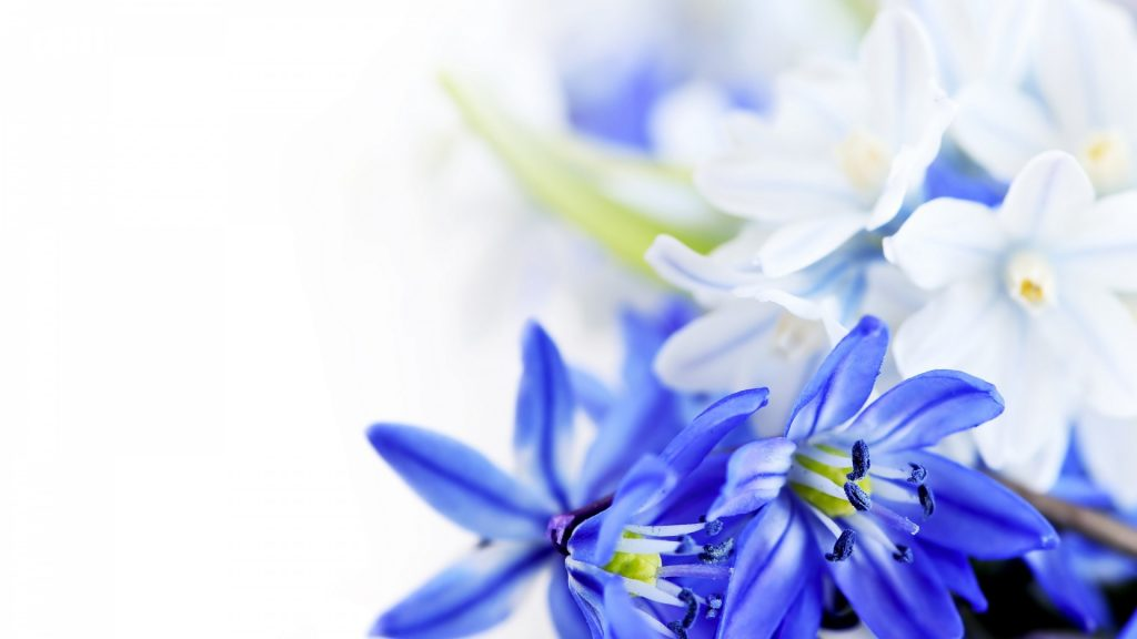 blue-flowers-wallpapers-high-definition-5-zCcXy