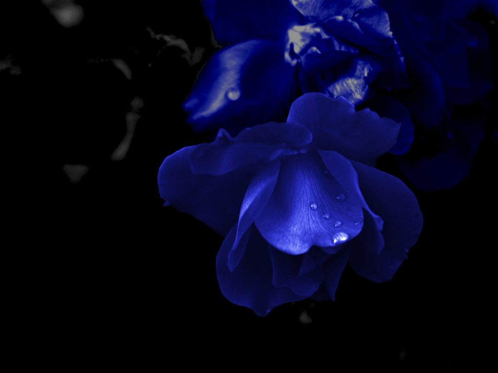 dark-blue-flowers-tumblr-images-3-3OCFy