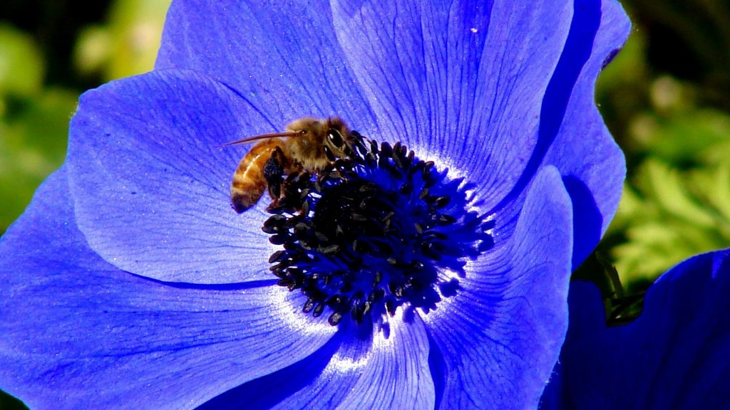 flowers-bees-blue-1920x1080-36540