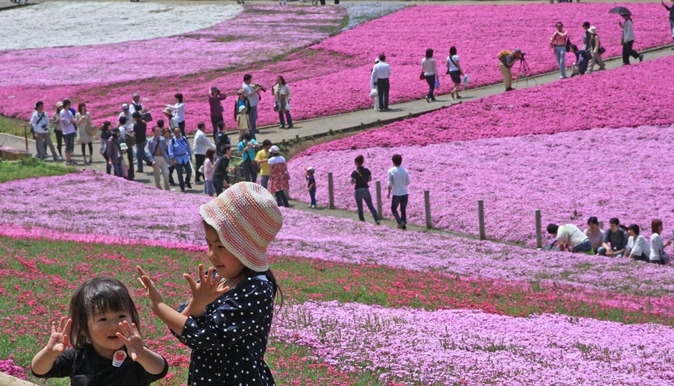 "SAITAMA, JAPAN - MAY 02: Moss phlox flowers are seen in full bloom in Hitsujiyama Park on May 2, 2009 in Chichibu, Saitama, Japan. Over 400,000 pink, white and purple 'Moss Phlox' in approximately 16,500 square meters attract many local visitors during the holiday season named ""Golden Week"" in Japan. (Photo by Junko Kimura/ Getty Images)"
