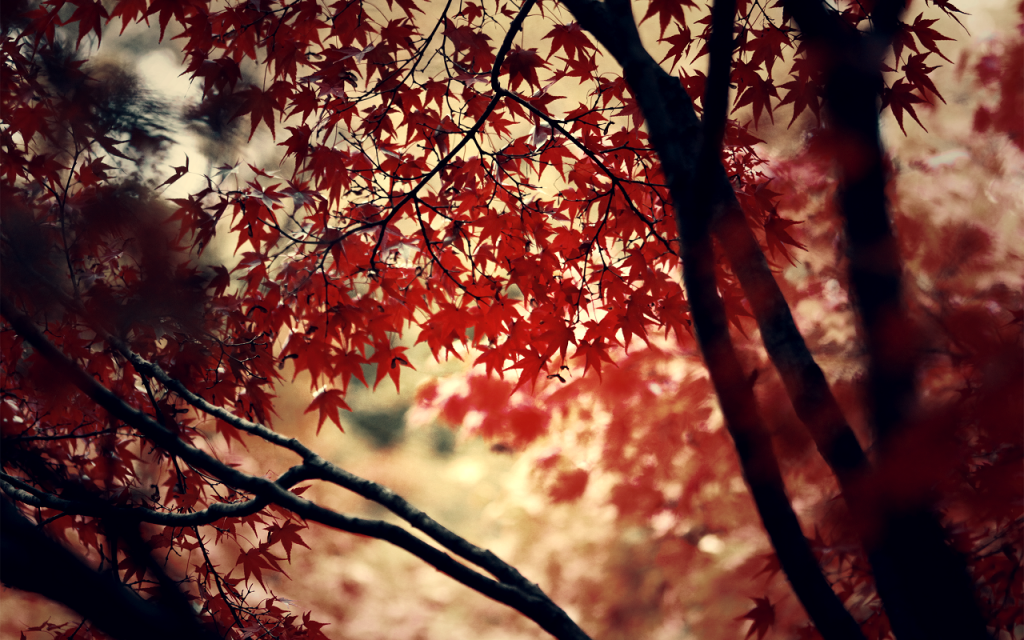 Otoño-Mundo-en-Ocres-wallpapers-hd-fotosdelanaturaleza.es (1)