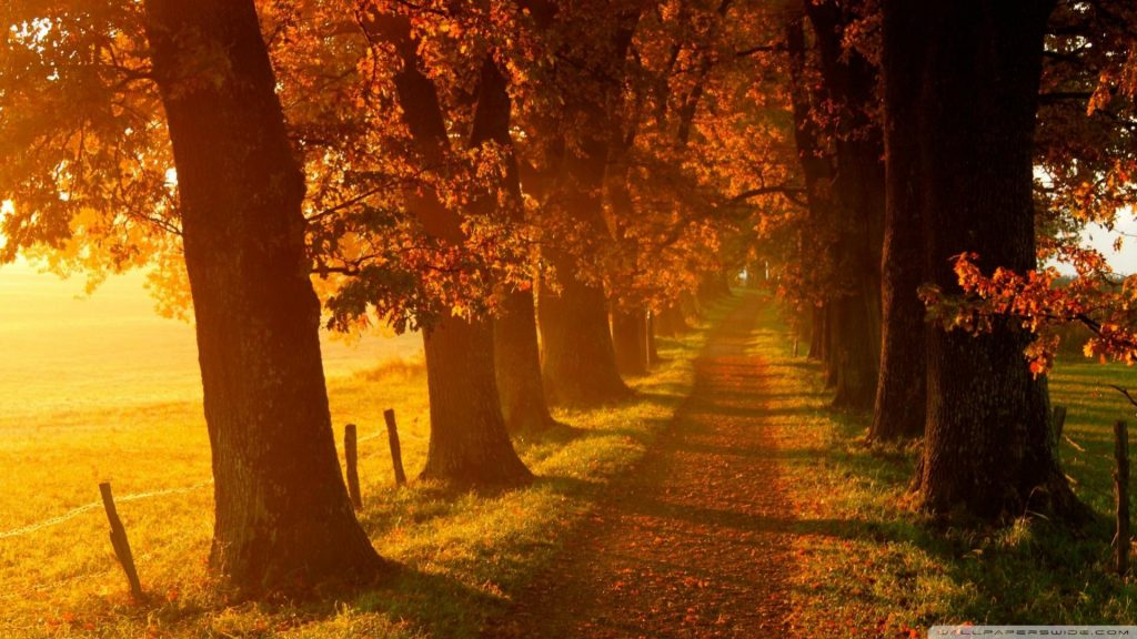 Otoño-Wallpapers-Hd-fotosdelanaturaleza.es (12)