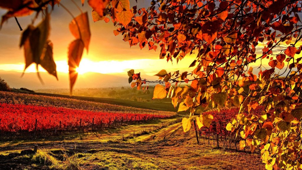 Otoño-Wallpapers-Hd-fotosdelanaturaleza.es (16)