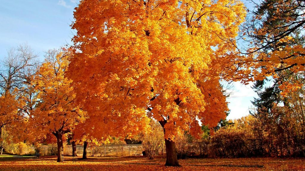 Otoño-Wallpapers-Hd-fotosdelanaturaleza.es (17)