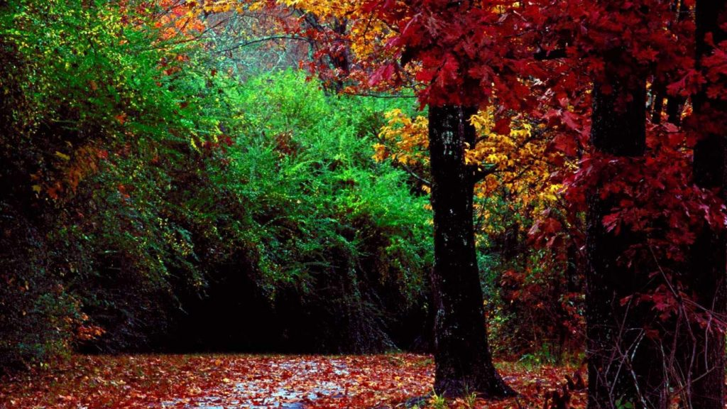Otoño-Wallpapers-Hd-fotosdelanaturaleza.es (19)
