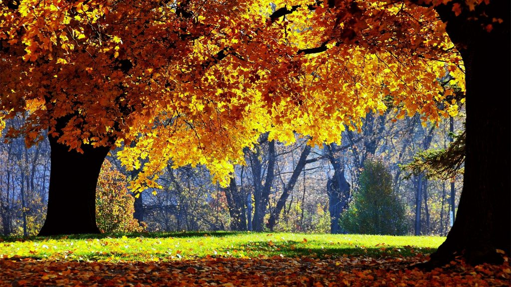 Otoño-Wallpapers-Hd-fotosdelanaturaleza.es (20)