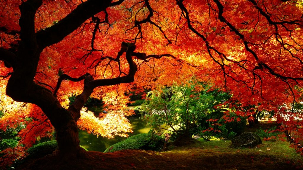 Otoño-Wallpapers-Hd-fotosdelanaturaleza.es (21)