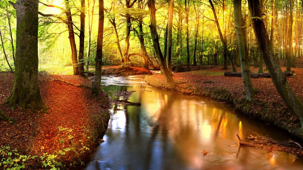 Otoño-Wallpapers-Hd-fotosdelanaturaleza.es (4)