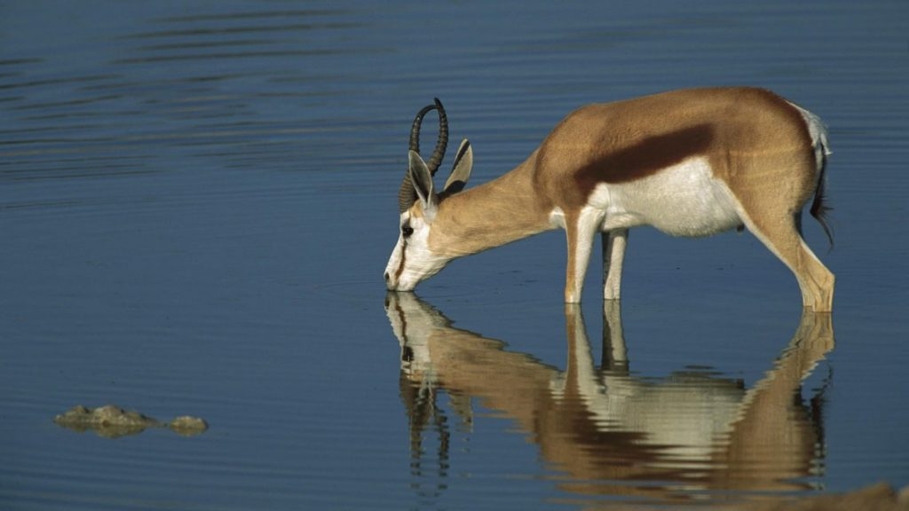 Wallpapers-HD-de-Antilopes-fotosdelanaturaleza (1)
