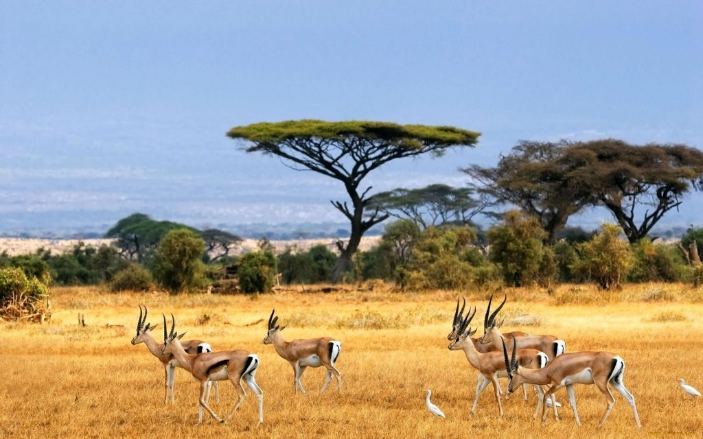Wallpapers-HD-de-Antilopes-fotosdelanaturaleza (3)