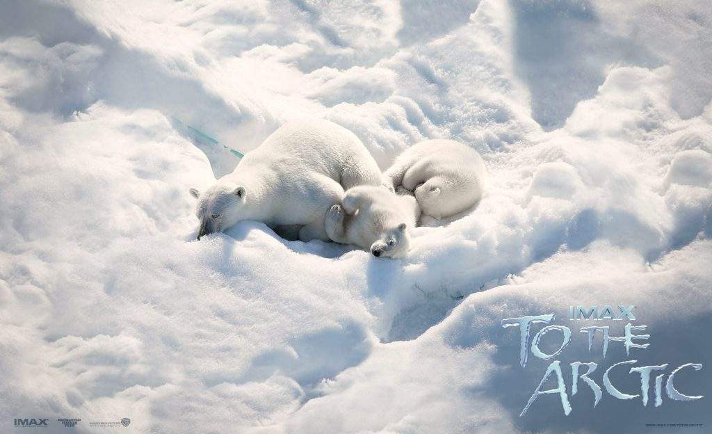 To The Arctic movie